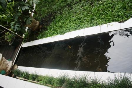 Kolam Ikan di Kampus Pascasarjana UNJ